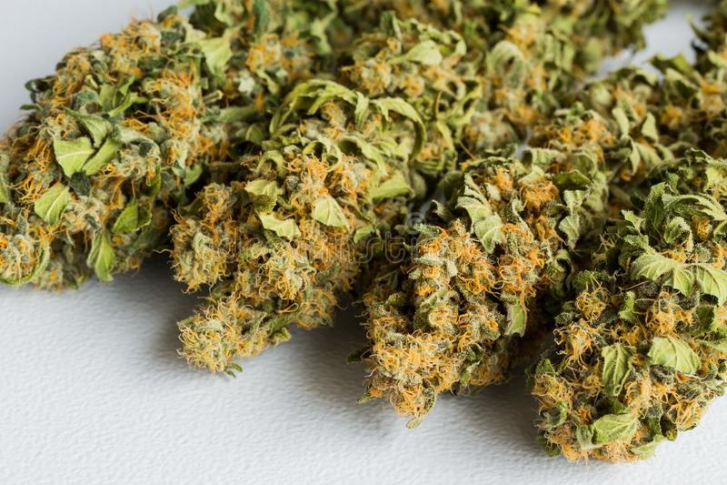 宏指令接近一棵干大麻医疗大麻植物与 库存图片
