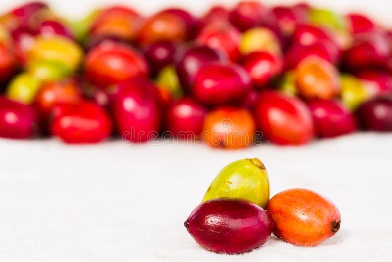 宏指令有机许多颜色樱桃咖啡豆 库存照片