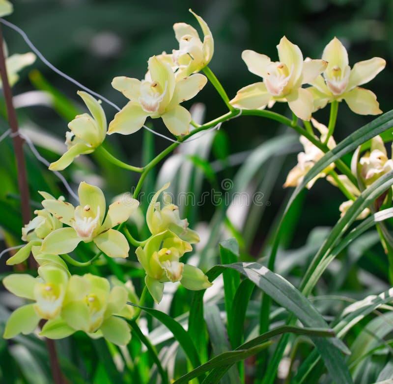 宏观兰花在植物园里 免版税库存照片