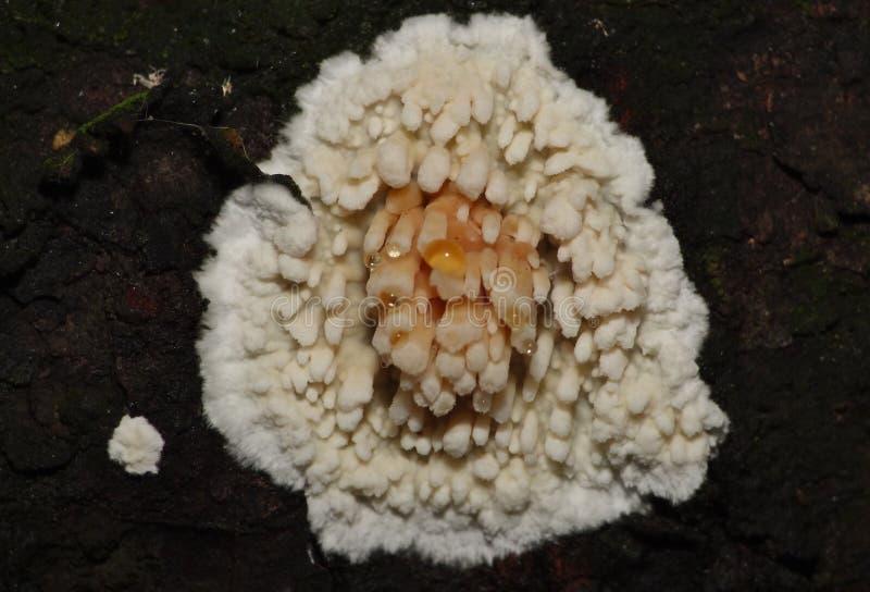 宏观树模子/真菌/真菌-英国 免版税库存照片