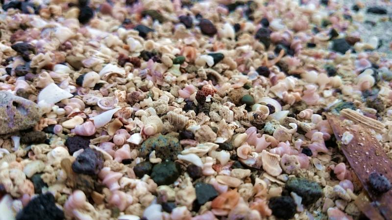 宏观沙子特写镜头壳和岩石,热带菲律宾 免版税库存照片