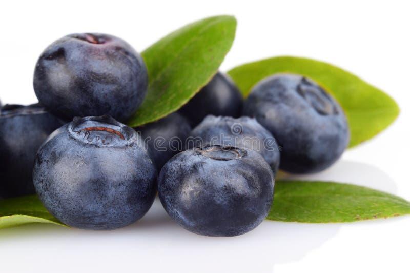 宏观特写镜头视图蓝莓叶子隔绝了白色 库存照片
