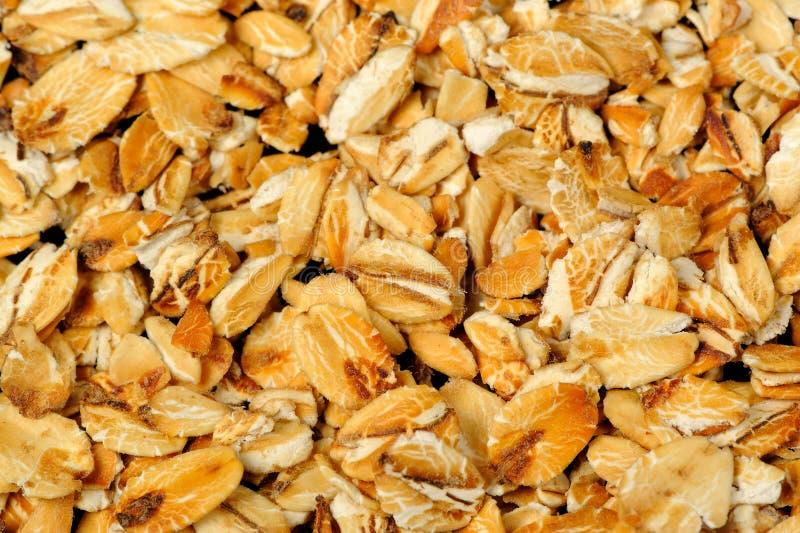 宏观的燕麦片 免版税库存照片