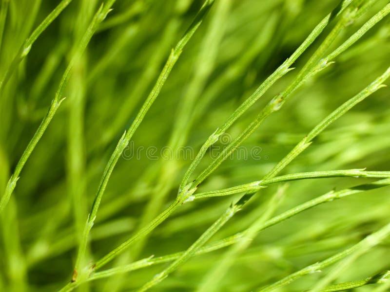 宏观绿色植物词根 库存照片
