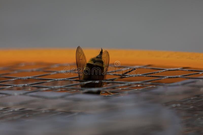 宏观蜜蜂的螯 库存图片