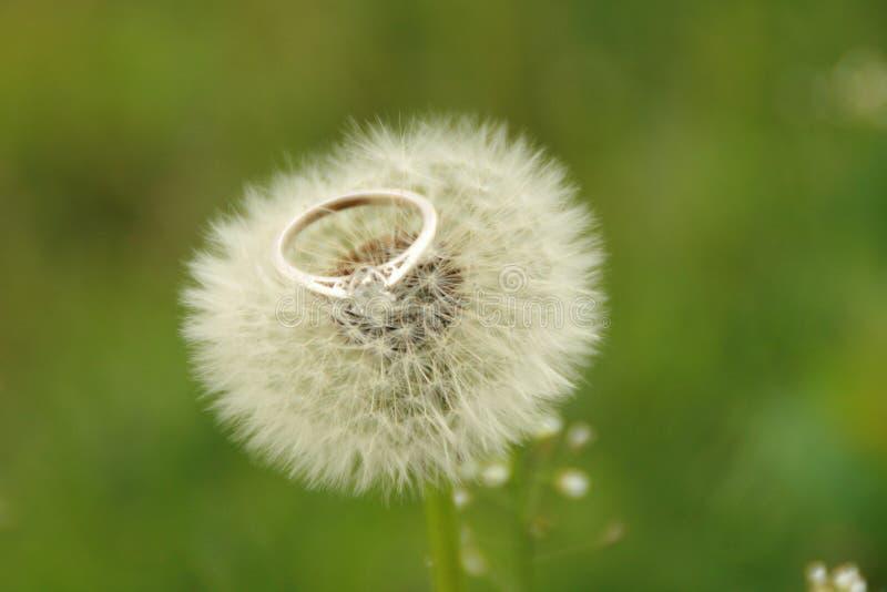 定婚戒指-在秀丽的秀丽 免版税库存照片