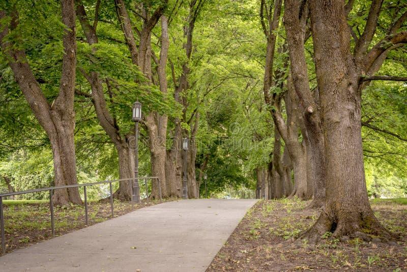 宜人的步行通过有树的一个公园 免版税库存照片