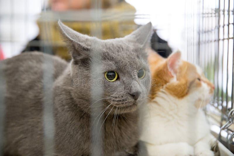实施无家可归的猫 免版税库存照片