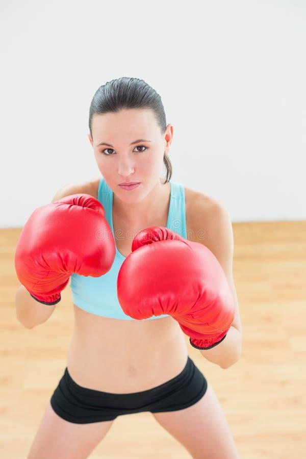 实践在健身演播室的坚定的拳击手 图库摄影