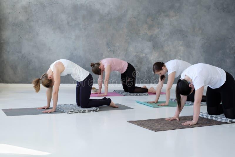 实践瑜伽的年轻白种人妇女做pilates锻炼 免版税库存照片