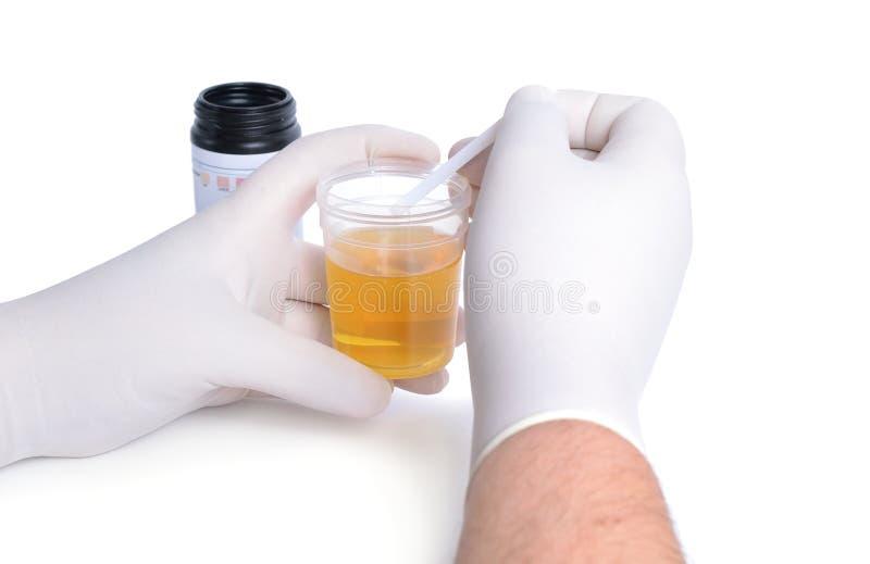 实验员调查从试验片的尿 库存照片