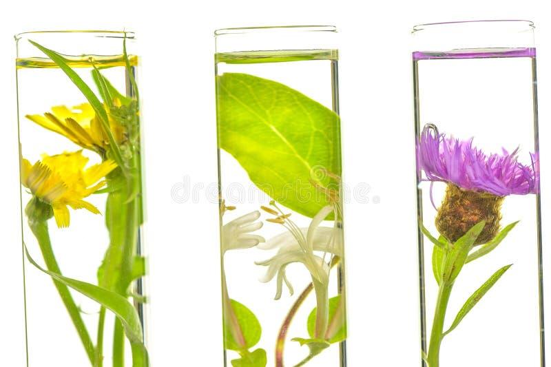 实验室、桃红色、忍冬属植物、蓟和蒲公英在测试木盆 免版税图库摄影