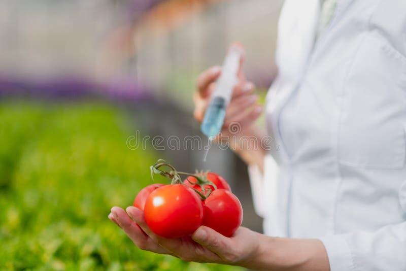 实验室外套和防护手套的一名科学家生物学家介绍蓝色液体入菜,蕃茄 库存照片