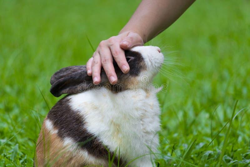 宠爱在鼻子的兔宝宝,当在公园时 免版税库存照片