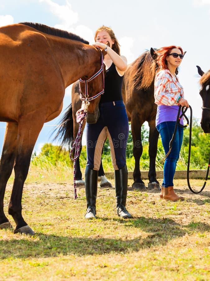 宠爱棕色马的骑师女孩 库存照片