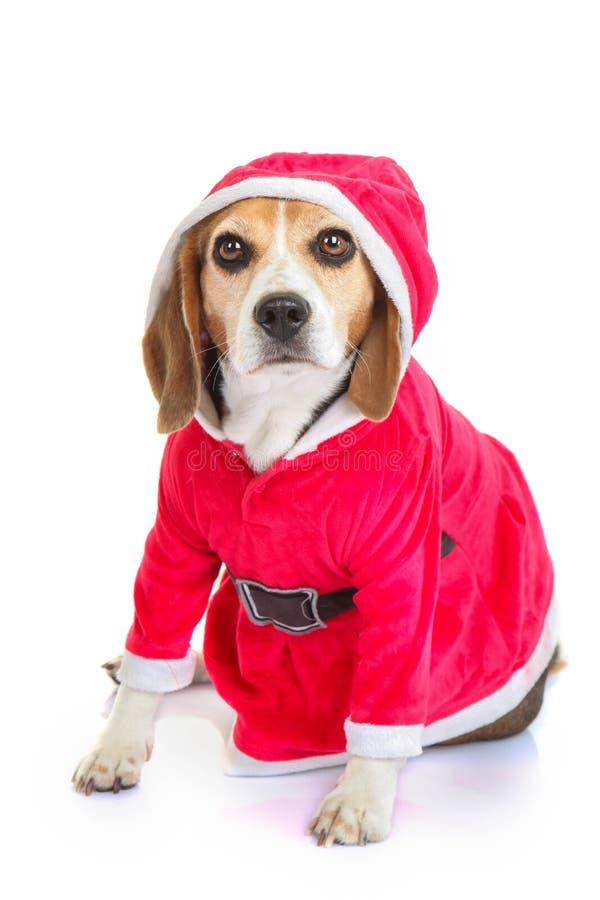 宠物圣诞老人圣诞节节日礼物 免版税库存图片