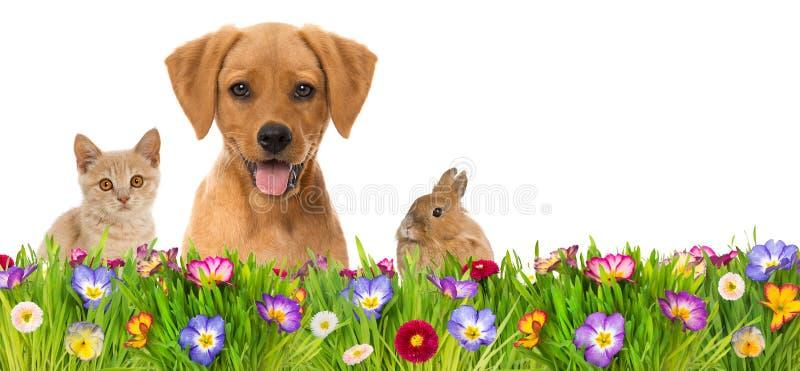 宠物在春天花草甸 免版税图库摄影