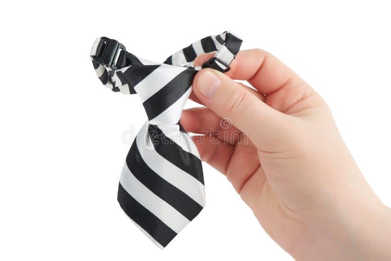 宠物在条纹的` s领带 免版税库存图片