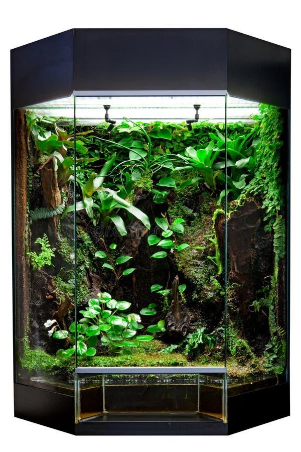 宠物热带雨林的玻璃容器 库存图片