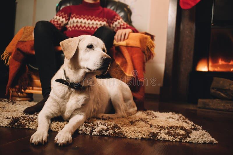 宠物由壁炉温暖 库存图片