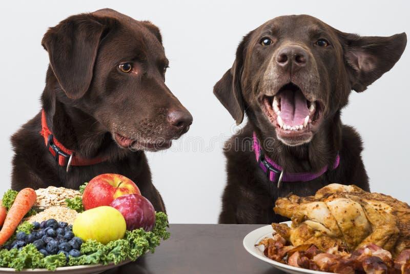宠物的食物的饮食 库存图片