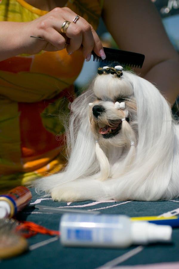 宠物美发师 免版税库存照片