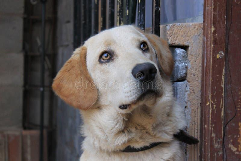 宠物面孔 免版税库存照片