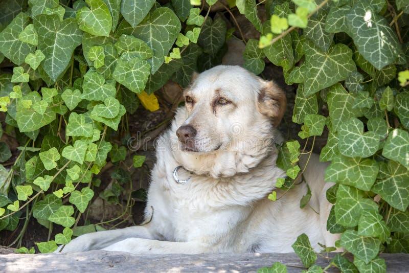 宠物;室外逗人喜爱的狗 议院狗 库存照片