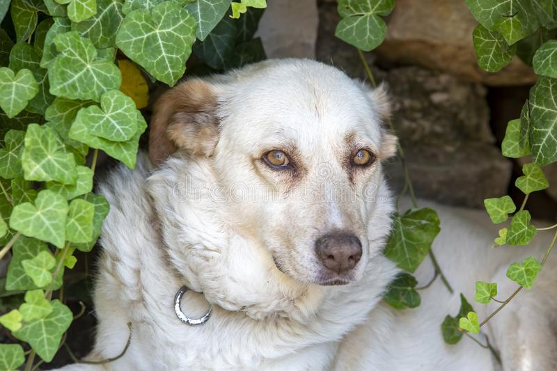 宠物;室外逗人喜爱的狗 议院狗 库存图片
