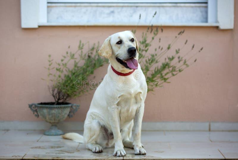 宠物;室外逗人喜爱的狗 议院狗 免版税库存图片