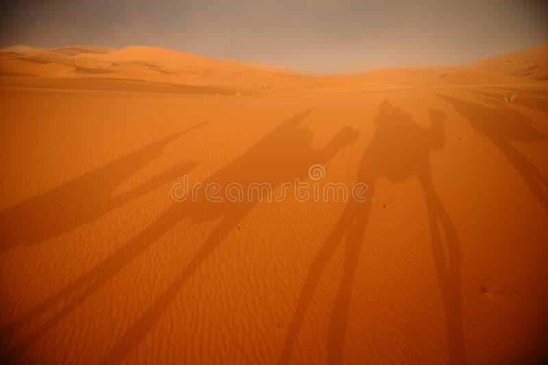 审阅在萨哈的沙丘的骆驼有蓬卡车的阴影 免版税图库摄影
