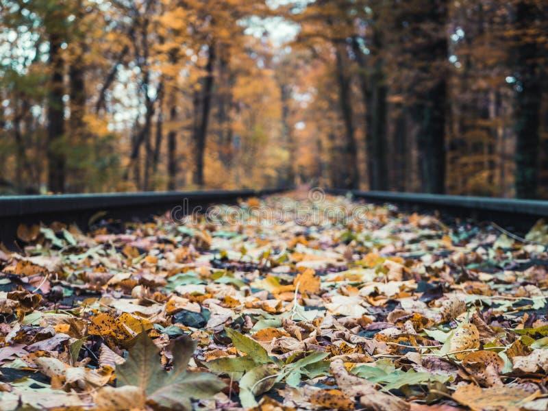 审阅森林的铁路低角度射击在秋天 免版税图库摄影