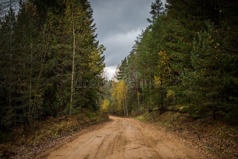 审阅秋天森林的森林公路 免版税库存图片
