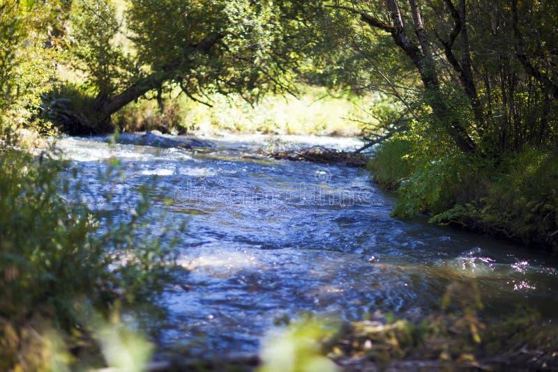 审阅绿色森林在一个夏天晴天,阿尔泰的山河快速的小河 免版税图库摄影