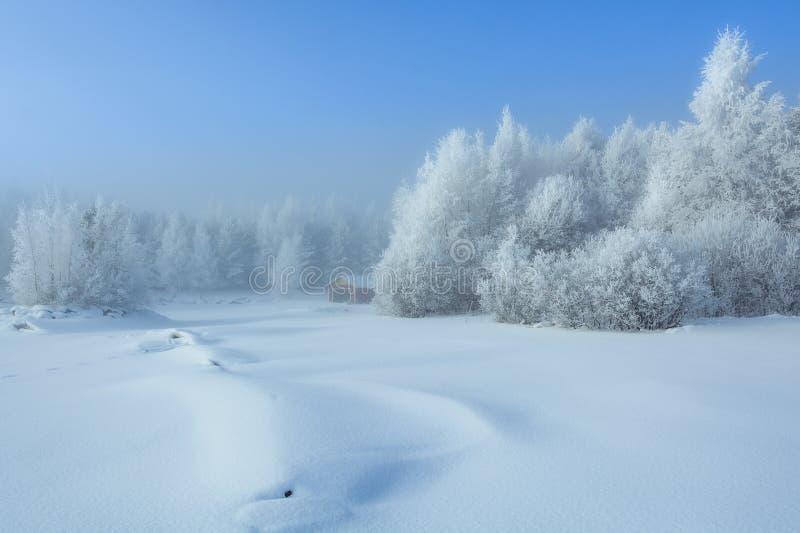 客舱在冬天森林 图库摄影
