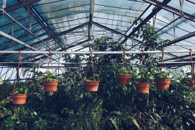 室内植物图隐喻 库存图片
