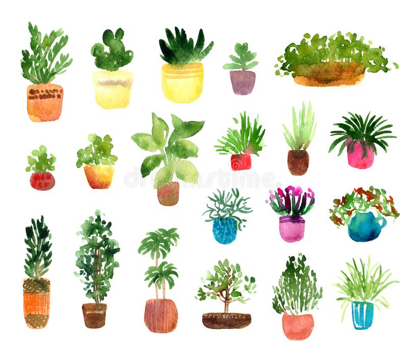 室内植物水彩集合 库存例证