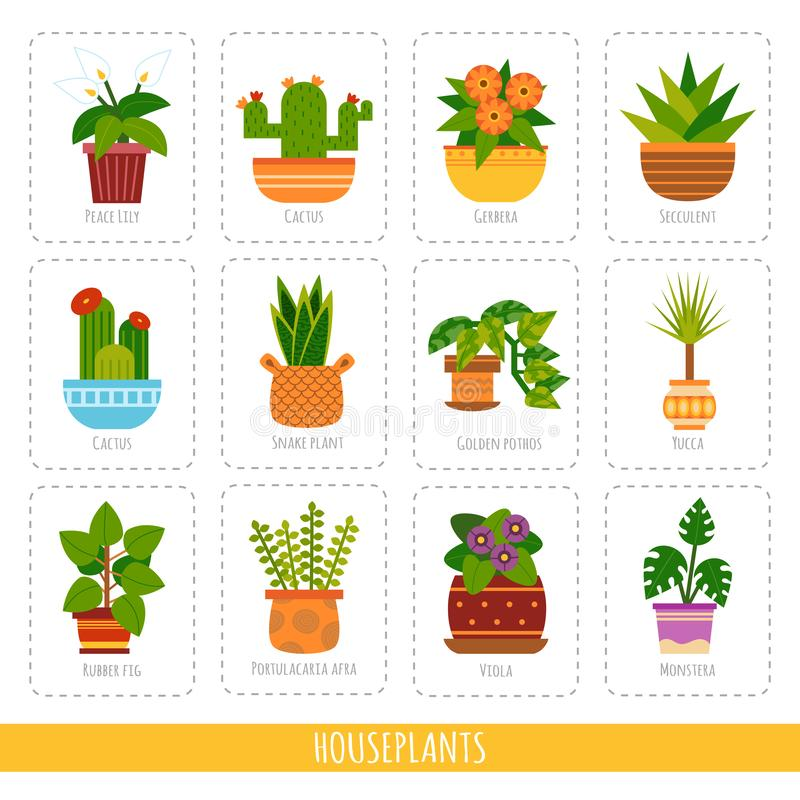 室内植物的动画片汇集 传染媒介套得知的五颜六色的卡片植物种类 库存例证