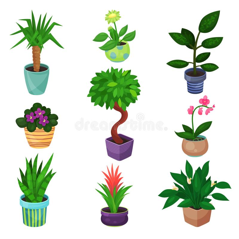 室内植物集合、植物和花导航例证 库存例证