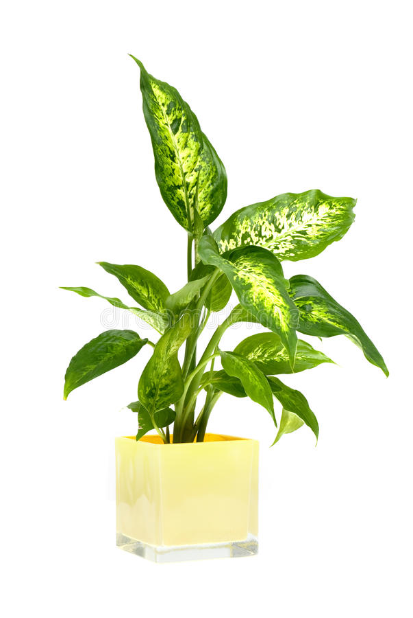 室内植物 库存照片