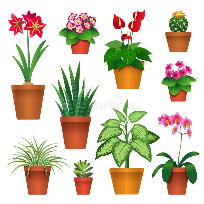 室内植物 库存例证