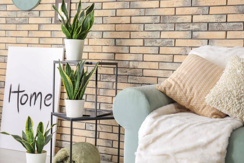 室内部的装饰百合科植物植物  库存图片
