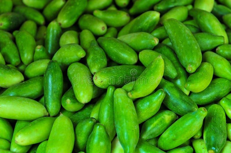 室外新绿色黄瓜的收藏 免版税库存图片