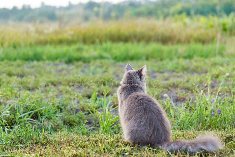 室外灰色街道的猫 免版税图库摄影