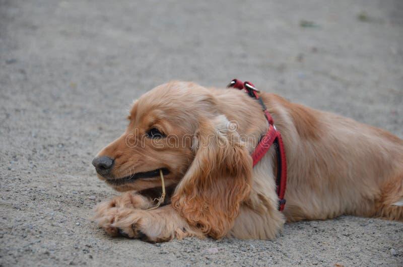 室外的狗 免版税库存照片