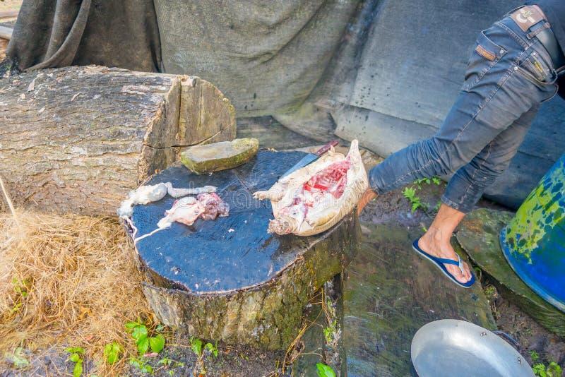 宰割午餐的土产厄瓜多尔僧人人犰狳 免版税库存照片