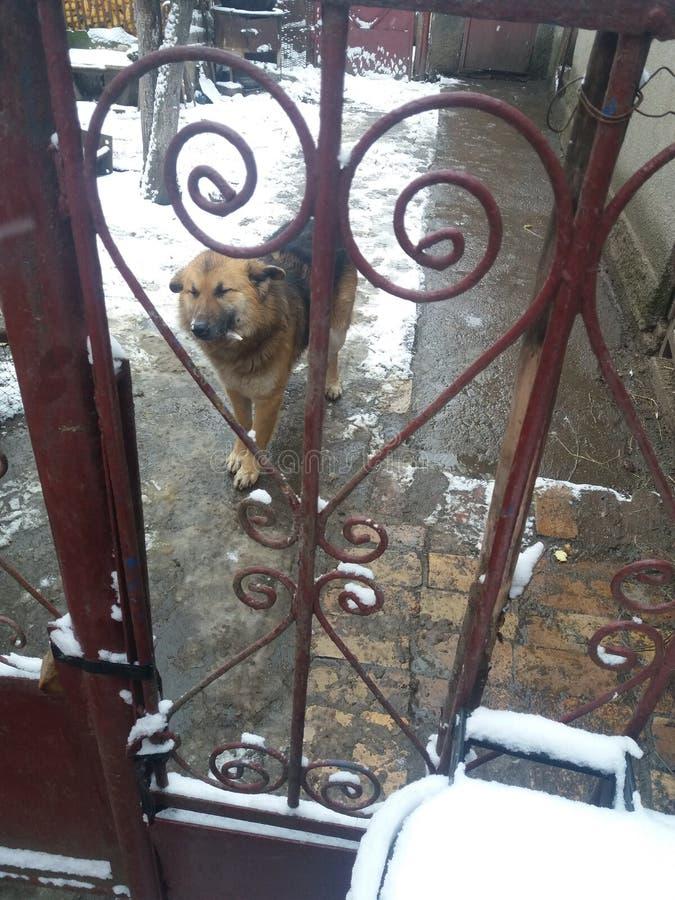 害羞的狗 免版税库存图片