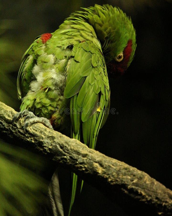 害羞的鸟 免版税库存照片