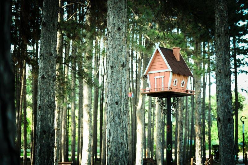 家在杉木森林里塑造了木鸟房子 免版税库存照片