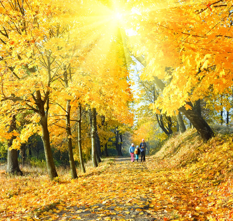 家庭在秋天阳光槭树公园 库存图片